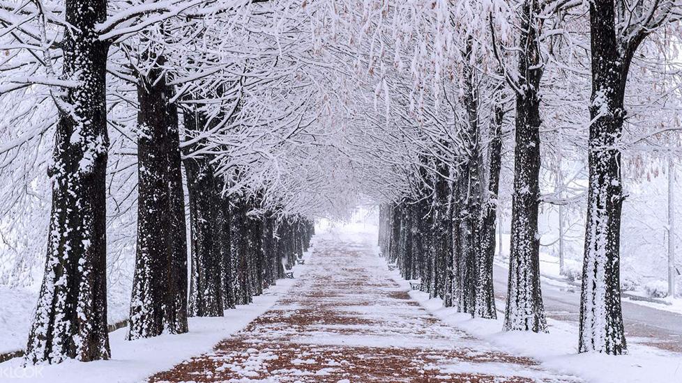 Tuyết đang rơi hay tuyết đang tan - lúc nào lạnh hơn