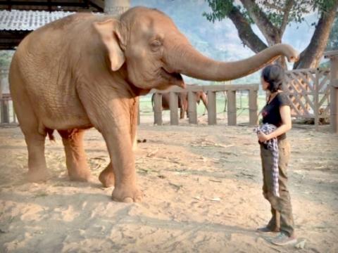 Kinh ngạc cô gái có tài hát ru voi ngủ