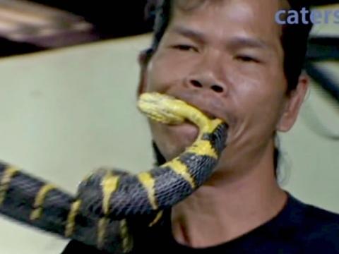 Dị nhân khống chế rắn độc bằng miệng
