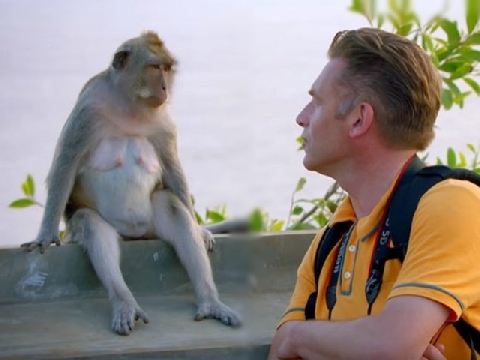 Khỉ trộm đồ của du khách như siêu đạo chích!