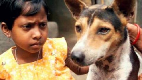 Bị ép cưới chó chỉ vì... răng mọc lệch!