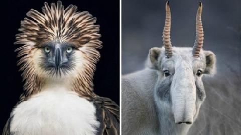 10 động vật trở lại sau khi bị tuyên bố tuyệt chủng!