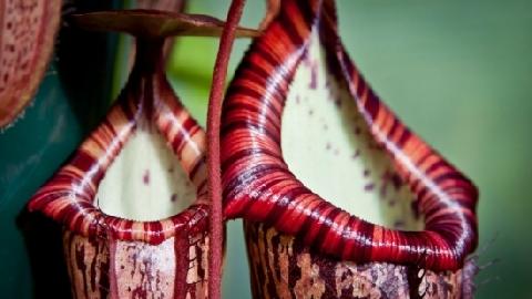 7 loài thực vật Ăn Thịt Người nếu như chúng tiến hóa khổng lồ