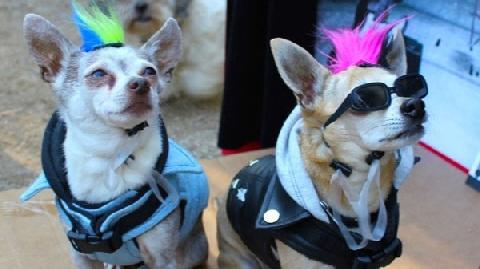 Đến Hong Kong dự lễ đi bộ cùng cún cưng