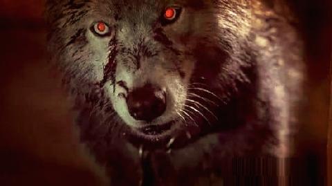 10 động vật có thật được Quỷ Dữ tạo ra!