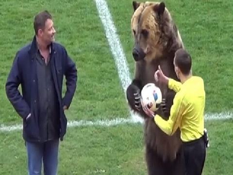 Gấu đưa bóng cho trọng tài và hướng dẫn CĐV vỗ tay