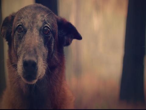 Phim ngắn: Chỉ có chó là loài không bao giờ rời bỏ bạn