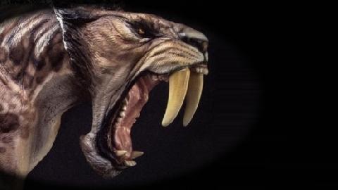 Rất may là 9 loài vật khủng khiếp này đã... tuyệt chủng