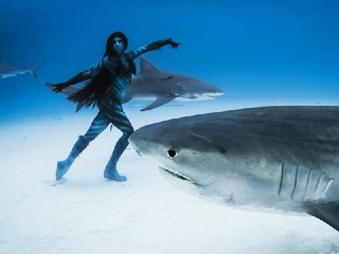 Mẫu nữ đẹp lung linh bên đàn cá mập dưới đáy biển