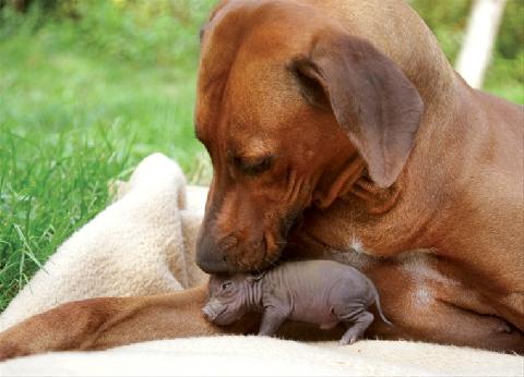 Những loài động vật dù có chết cũng phải bảo vệ con