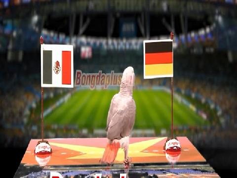 Vẹt tiên tri dự đoán kết quả trận Đức - Mexico