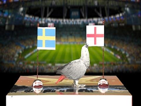 Vẹt Natasha dự đoán trận Thụy Điển - Anh