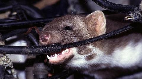 Trăm người hoảng loạn vì nhầm chuột là 'đánh bom khủng bố'
