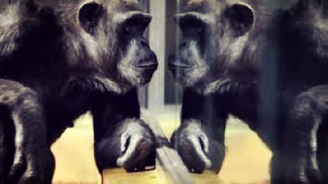 Phản ứng của động vật khi soi gương