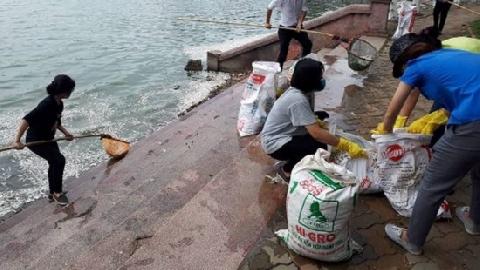 Dân vớt hàng tạ cá chết ở Hồ Tây về ủ làm phân bón