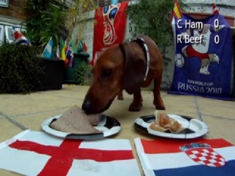 Chó Psychic đoán Anh thắng Croatia để gặp Pháp ở chung kết
