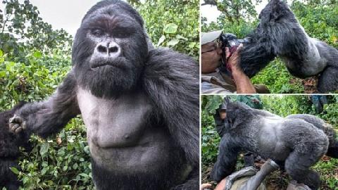 Cho khỉ ăn, bé gái bị đấm ngã tại Trung Quốc