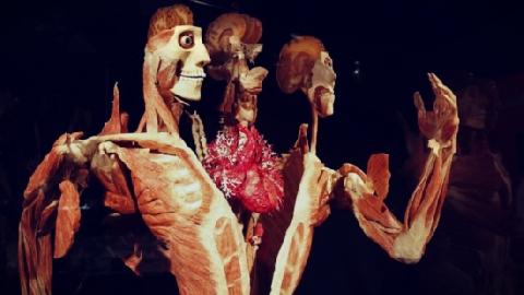 Bí ẩn đằng sau việc 'Nhựa hóa cơ thể người'
