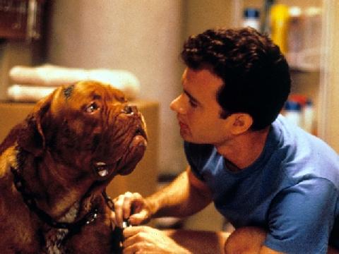 'Turner và Hooch': Hãy yêu thương chú chó của bạn khi còn có thể!