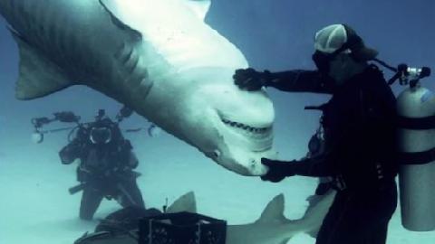 Dị nhân biết thôi miên cá mập