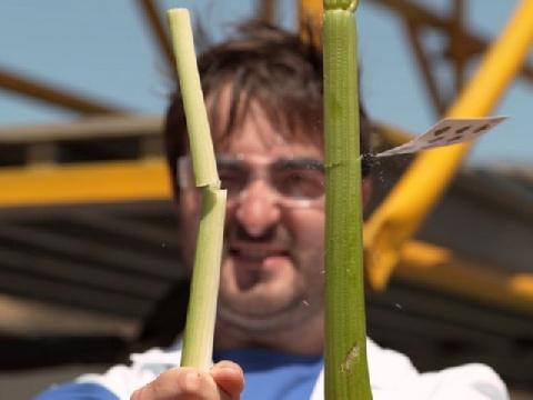 Người ''phi bài'' nhanh nhất thế giới chém đứt lìa củ cà rốt