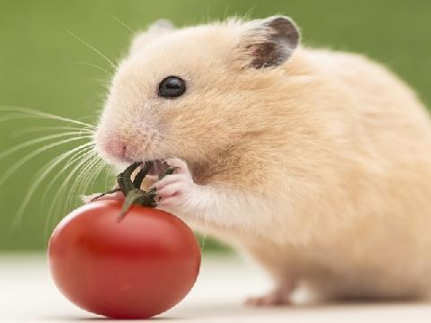 Trung Quốc tạo ra chuột con từ hai chuột cái