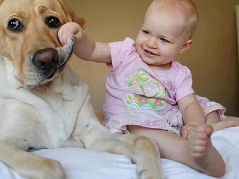 Em bé đắp mặt nạ làm đẹp cho chó và cái kết