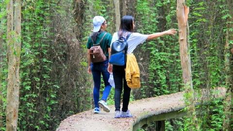 Con đường xuyên rừng bí ẩn độc nhất vô nhị ở Việt Nam