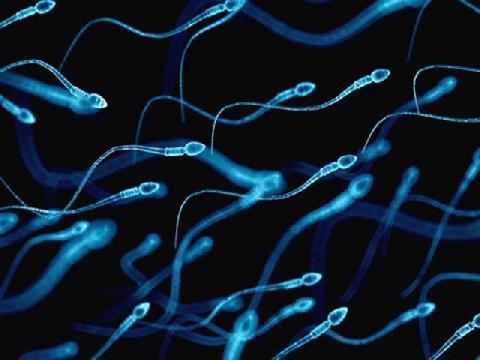 Tinh trùng đã ''thể hiện mình'' như thế nào dưới kính hiển vi?