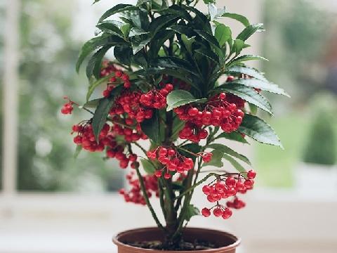8 loại cây rước lộc vào nhà nhất định phải trồng trong năm mới
