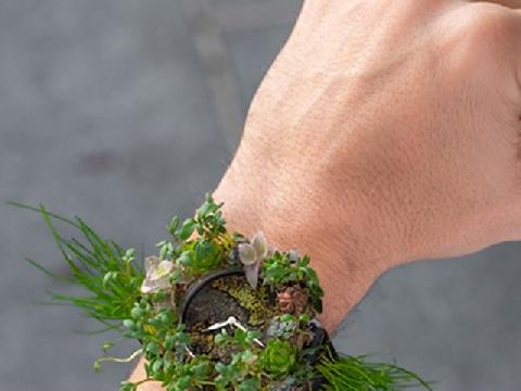 Bộ sưu tập đồng hồ Thụy Sĩ làm từ...hoa cỏ
