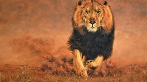 Người dân la hét hoảng loạn vì bị sư tử đói mò vào tận làng rượt đuổi