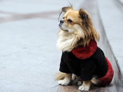 Chú chó chờ chủ nhiều tháng liền ở trạm xe bus