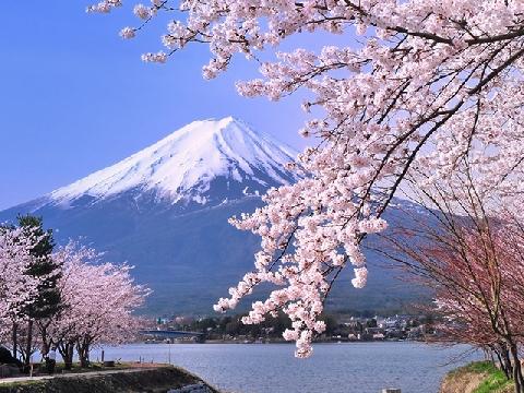 7 điểm ngắm hoa anh đào đẹp nhất Nhật Bản