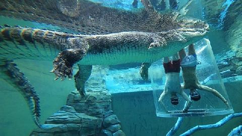 Trải nghiệm ''lồng tử thần'' cùng cá sấu khủng