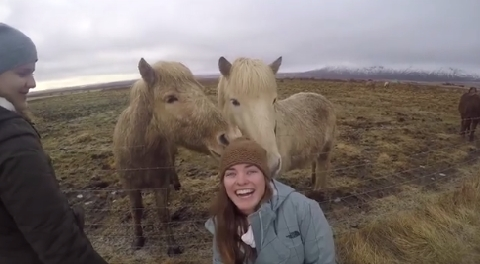 Khi ngựa nói không với việc cưỡi
