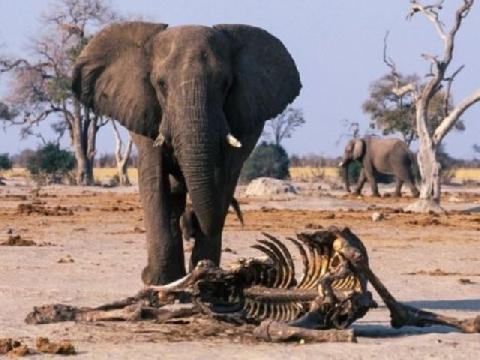 Những thứ Không Tưởng được tìm thấy trong cơ thể động vật