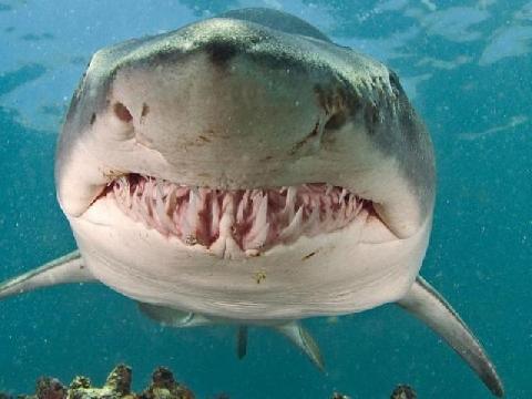 10 sự thật Kinh Dị bạn không bao giờ nên biết về Cá Mập