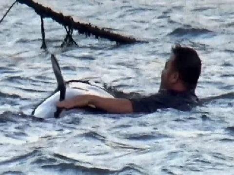 Ngư dân Ninh Thuận giải cứu bất thành cá voi mắc kẹt