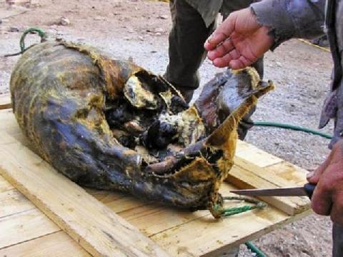 Món ăn kinh dị: Hải cẩu thối rữa nhồi chim chết