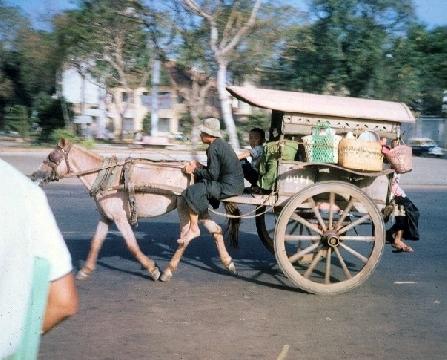 Xe buýt vượt ẩu, lấn vào xe ngựa khiến con vật trượt dài trên đường