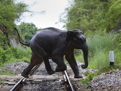 Cơn thịnh nộ của voi khiến nhiều người dẫm đạp lên nhau