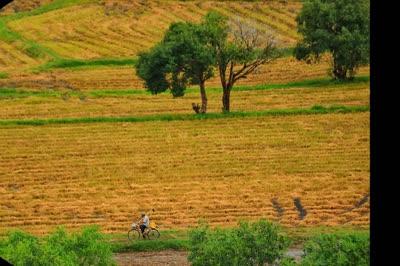 Mê mẩn đắm chìm trên cánh đồng lúa Tà Pạ ở Tri Tôn