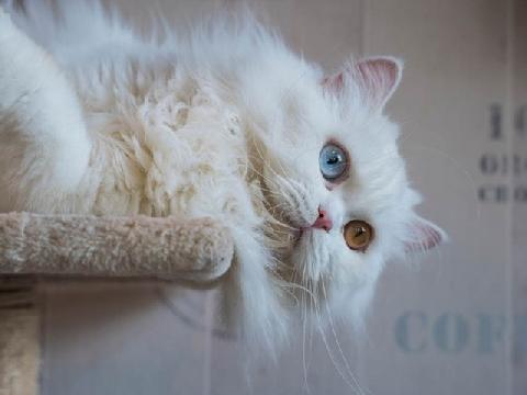 Ước được sống vương giả như loài mèo