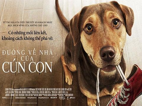 'A Dog's Way Home': Phim không xuất sắc nhưng lại đủ để bạn đắm chìm khóc cười