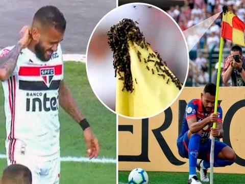 Dani Alves bị đàn ong tấn công khi thi đấu tại giải Brazil