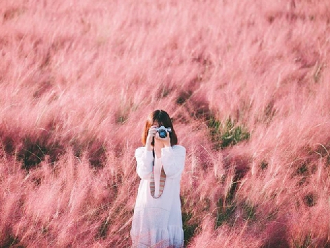 Đến nơi có cỏ hồng nhuộm cả khung trời mùa thu