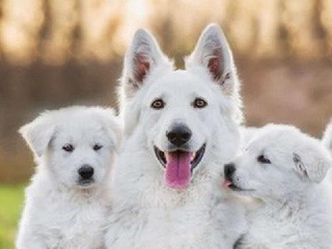 Tan chảy với những bức ảnh gia đình đáng yêu của các loài động vật