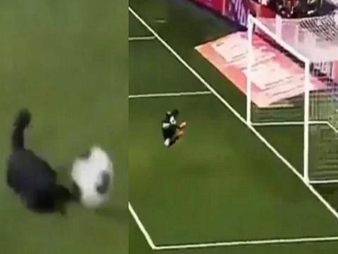 Mèo sút và ghi bàn như siêu sao bóng đá