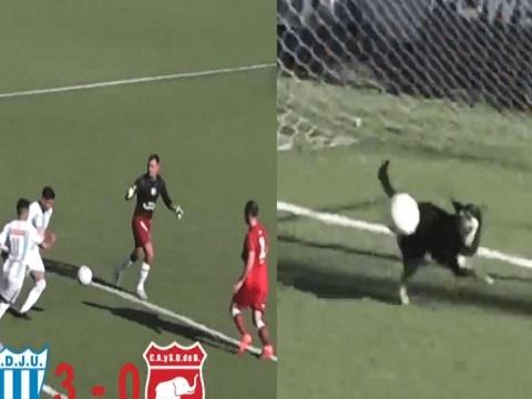 Đội bóng Argentina được cứu thua ngoạn mục bởi...chú chó